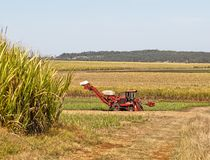 Red farm cane harvester on sugarcane plantation Royalty Free Stock Photo