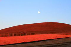 Red farm. In Inner Mongolia of china Stock Images