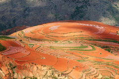 Red farmland ,dongchuan,yunnan,china Royalty Free Stock Image