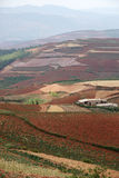 Red farmland with village in dongchuan of china Royalty Free Stock Images
