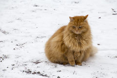 Red fat cat. On snow Stock Photos