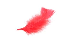 Red feather Royalty Free Stock Photos
