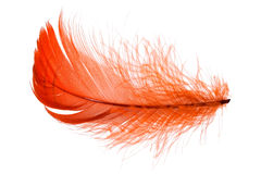 Red feather. Elegant red feather in human hand Stock Image