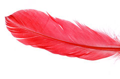 Red feather Royalty Free Stock Photography