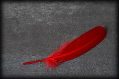 Red Feather Royalty Free Stock Image
