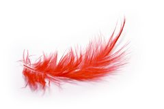 Red feather. On white background Royalty Free Stock Image