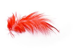 Red feather. On white background Stock Photo