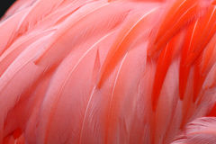 Red feather background Royalty Free Stock Images