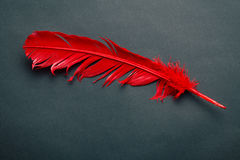 Red feather Stock Photography