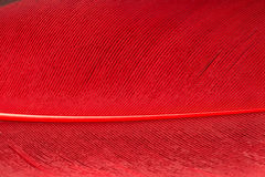 Red feather close up Stock Images