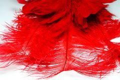 Red feather. And dance mask Royalty Free Stock Images