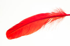 Red feather extreme close up Royalty Free Stock Photos