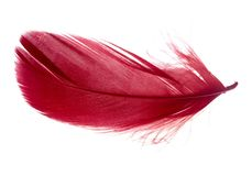 Red feather isolated on white background. Red feather isolated on a white background Stock Photo