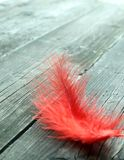 Red feather on old wooden royalty free stock photography