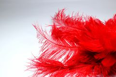 Red feather. And dance mask Stock Photo