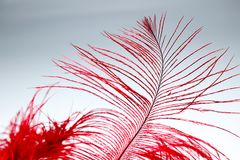 Red feather. And dance mask Stock Photography