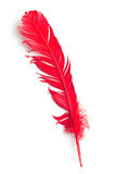 Red feather Royalty Free Stock Photo