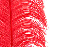 Red feather. On a white background close up Royalty Free Stock Photography