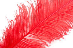 Red feather. On a white background close up Royalty Free Stock Image