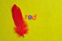 A red feather with the word red. On a yellow background Royalty Free Stock Photo