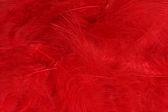 Red Feathers. Pile of feathers Stock Photo