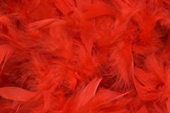 Red feathers. Background of red feathers, soft focus Stock Photos