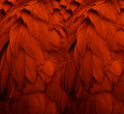 Red Feathers. I shot a photo of a crane, but on close examination realized I liked just the feathers Royalty Free Stock Photography