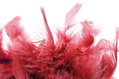 Red feathers Royalty Free Stock Images