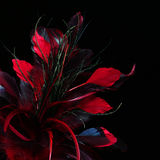 Red feathers over black Stock Images