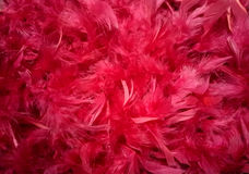 Red feathers plumage background royalty free stock photos