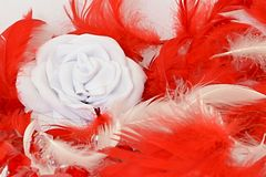 Red feathers white rose. Red and white feathers with white rose Stock Photo