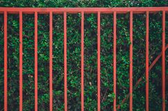 Red fence on the green tree wall royalty free stock photo