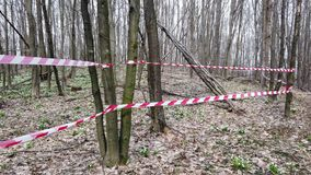 Red fencing tape. Blooming snowdrops in spring forest, a protected area, fenced with a red ribbon. Snowdrops are rare