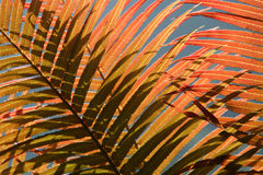 Red fern leaves Stock Photos