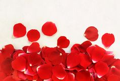 Red festive rose petals background, love flowers card royalty free stock photography
