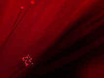 Red fiber optics. Macro of ends of a selection of illuminated red fiber optic light strands with defocused background Royalty Free Stock Photography