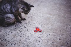 Red fidget spinner and cat. stock image
