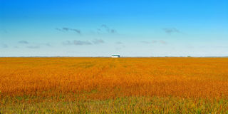 Red Field Royalty Free Stock Photo