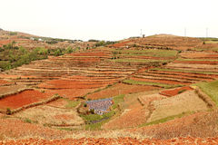 Red field anf landscape in Yunnan,china Stock Images