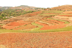 Red field anf landscape in Yunnan,china Royalty Free Stock Photos