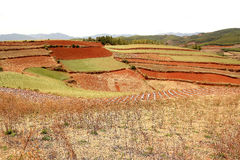 Red field anf landscape in Yunnan,china Stock Image