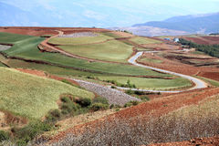 Red field anf landscape in Yunnan,china Royalty Free Stock Photo