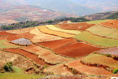 Red field anf landscape in Yunnan,china Royalty Free Stock Images
