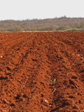 Red field countryside Royalty Free Stock Photos