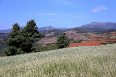 Red field and landscape in Yunnan,china Stock Photography
