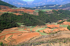 Red field and landscape in Yunnan,china Royalty Free Stock Photos