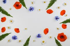 Red field poppies, daisies, cornflowers and green leaves frame on white background. Stock Photography
