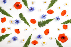 Red field poppies, daisies, cornflowers and green leaves pattern on white background. Stock Photography