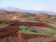Red field in Yunnan Royalty Free Stock Photos