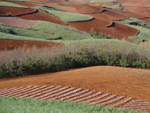 Red field in Yunnan Royalty Free Stock Images